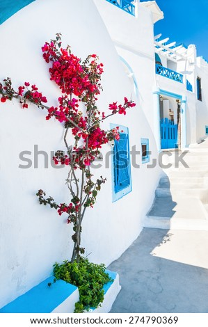 White architecture and flowers on the street. Santorini island, Greece. Beautiful summer landscape. - stock photo