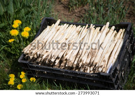 White Asparagus in a box - stock photo