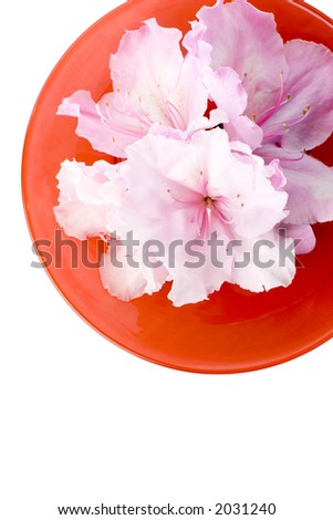 White azaleas sitting in a red glass bowl. This file includes a clipping path which has been used to isolate it from the background.
