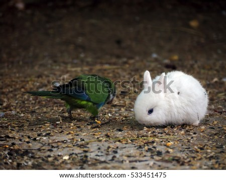White baby rabbit and green parrot