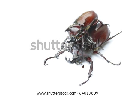 White background, close-up photos beetle