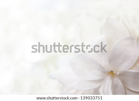 white background from flowers of lilac - stock photo