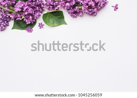 White background with space for text. Flowers and leaves of lilac