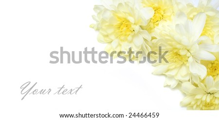 white background with yellow flowers