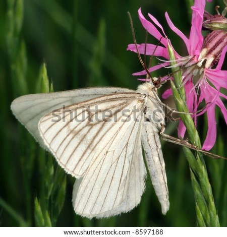 white beautiful butterfly on pink flower - stock photo