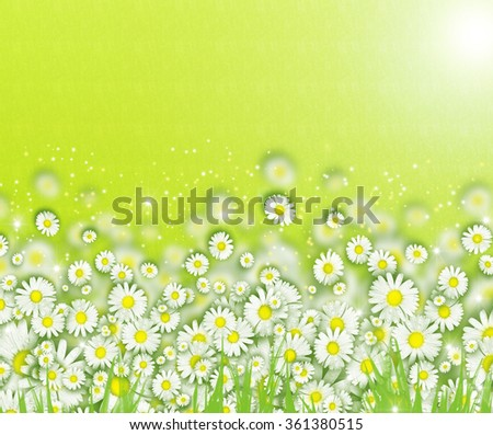 White beautiful daisies chamomile concept. White daisy border background. Summer spring trendy country side flowers concept. Field flowers on green bokeh backdrop. Bright trendy spring romantic effect