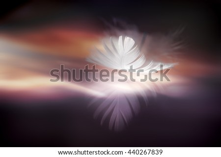 White beautiful feather with reflection on the background of bright glowing in dark brown, violet and orange tones - stock photo