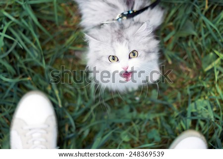 White beautiful female cat walking on green grass - stock photo