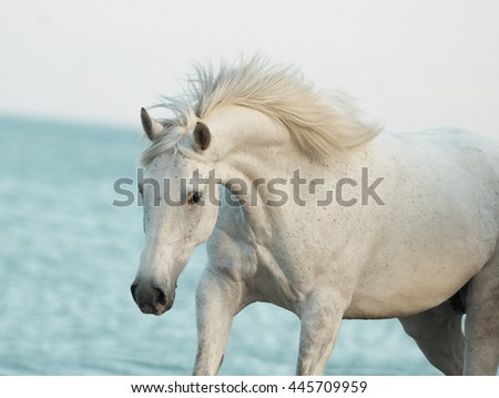 white beautiful horse closeup with blue sea behind