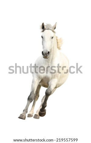 White beautiful horse galloping free isolated on white - stock photo