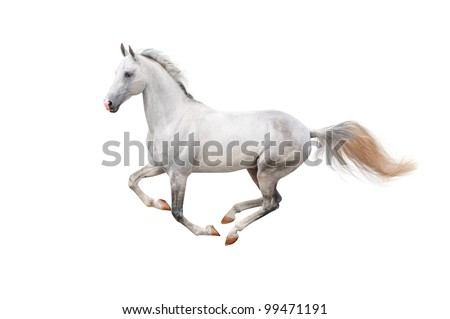 white beautiful horse isolated on white - stock photo