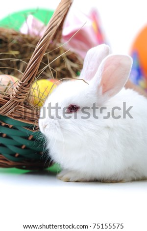 White beautiful rabbit, Easter bunny with eggs in basket - stock photo