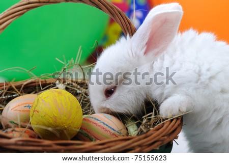 White Beautiful Rabbit Easter Bunny Eggs Stock Photo 75447133 ...