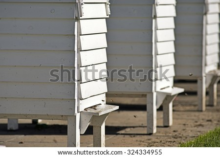 White bee houses with flying bees in autumn