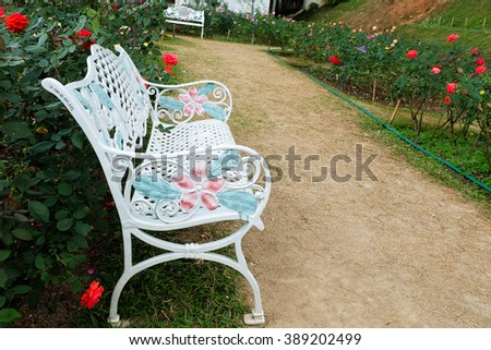 White bench and rose flower  in rose garden in the morning
