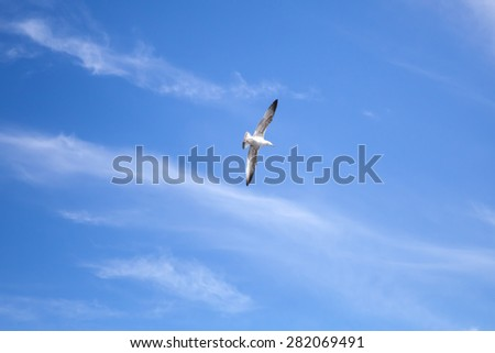 White big seagull flying on blue sky background with windy clouds - stock photo