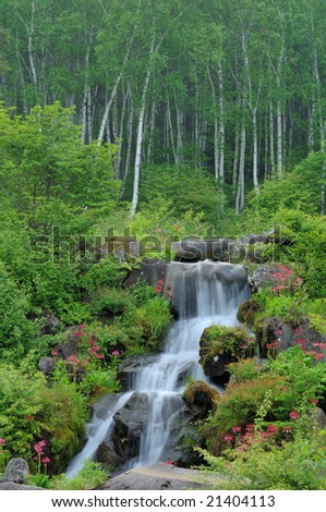 White birch and the waterfall of the fresh green - stock photo