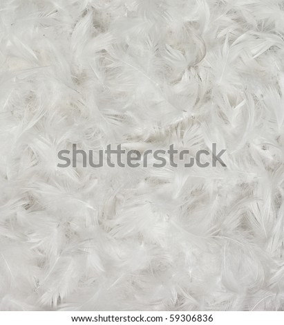 stock-photo-white-bird-feathers-backgrou