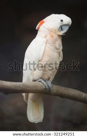 White bird on branch - stock photo