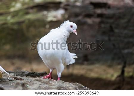 white bird on the nature. - stock photo