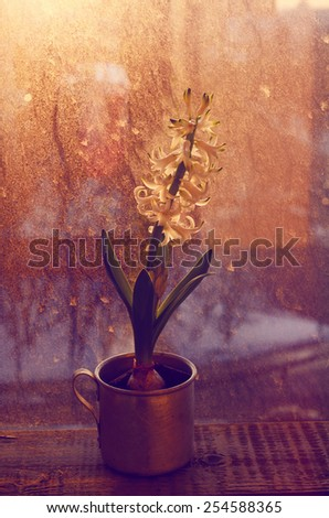 White blooming hyacinth flower in vintage metal cup on rustic window sill in sunset lights - stock photo