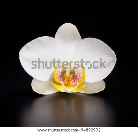 white blooming orchid on black background
