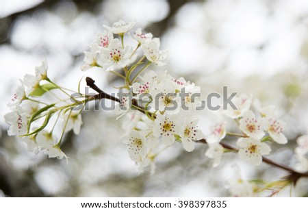 White Blossoms Outside