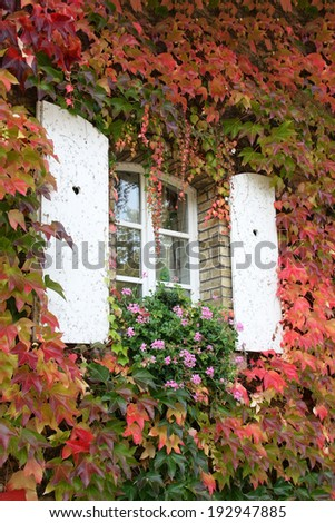 White board window with heart sharp holes, surrounded by autumn colorful ivy leaves - stock photo
