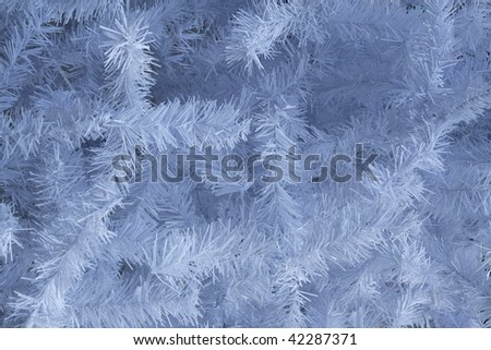 white branches of pine - stock photo