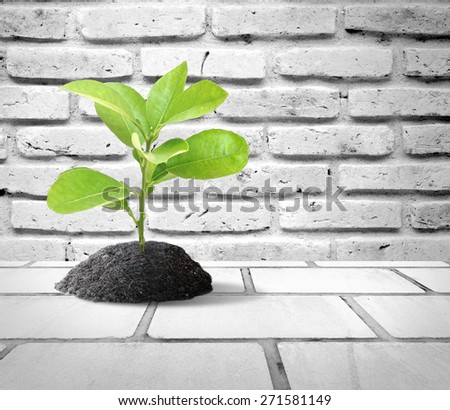 White brick wall background with little green tree on black soil for green concept