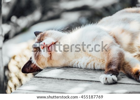White Brown Cat Sleep under the Sunshade Relax on Wood Floor  - stock photo