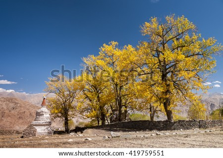 White buddhist stupa with autum trees and blue sky