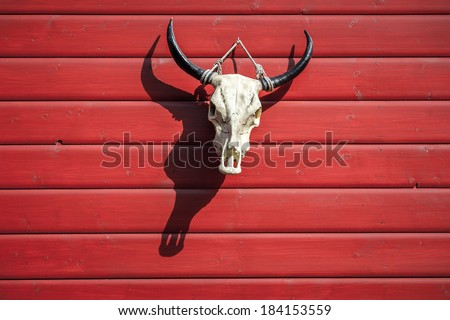 White bull skull with black horns hanging on a wooden red site of barn - stock photo