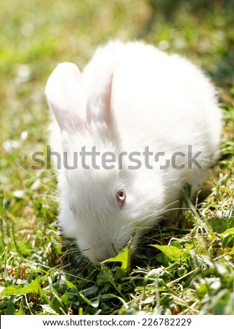 White bunny in green grass in the garden