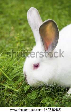 white bunny on green grass