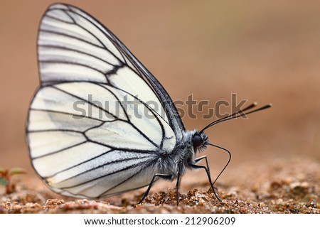 white butterflies on sand - stock photo