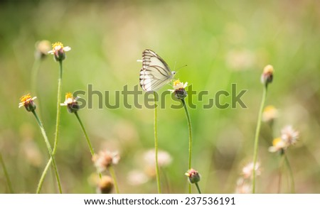 White butterfly and grass flower in green field - stock photo