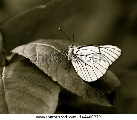 White butterfly on a green leaf (stylized retro) - stock photo