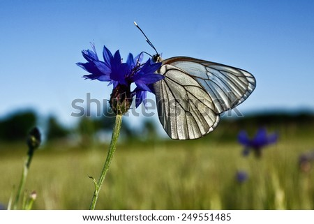 White butterfly on blue flower - stock photo