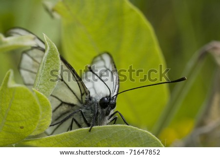 White butterfly on leaf