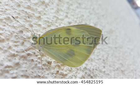 white butterfly sitting on a wall