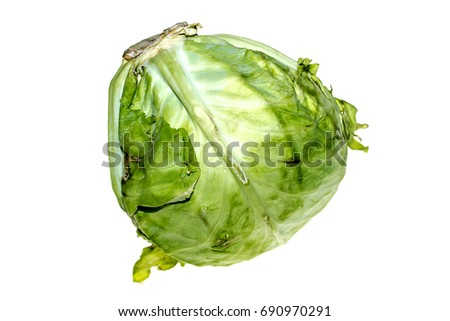 White cabbage on a white background