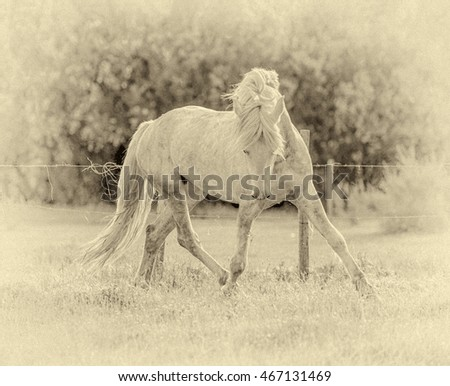 White Camargue Horse runing on the grass in the Parc Regional de Camargue - Provence, France (stylized retro)