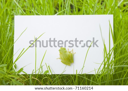 White card in grass with a tree frog