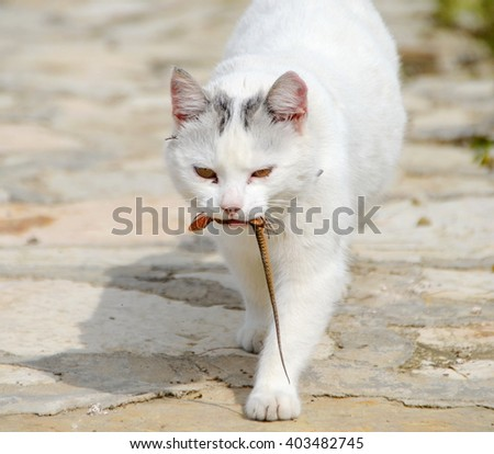 White cat caught a lizard - stock photo