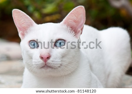 white cat close up - stock photo