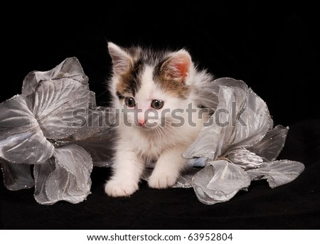 white cat curiosity - stock photo