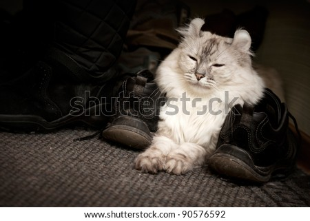 White cat drowsing on the carpet between shoes - stock photo