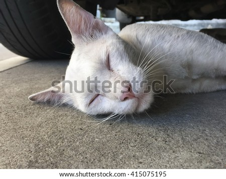 White cat eyes color lying under the car - stock photo