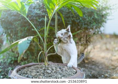 White cat fight green snake in untidy dirty garden, danger. - stock photo